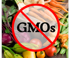 advantages and disadvantages of genetically engineered plants