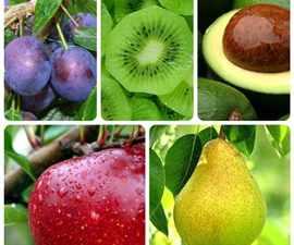 slabitelnye-frukty